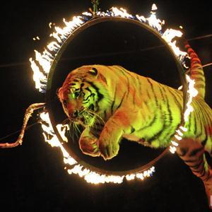 Цирки Гиагинской