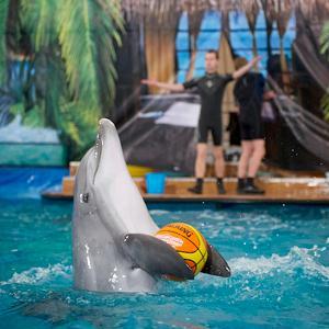 Дельфинарии, океанариумы Гиагинской