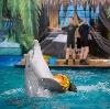Дельфинарии, океанариумы в Гиагинской